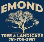 emond tree.jpg